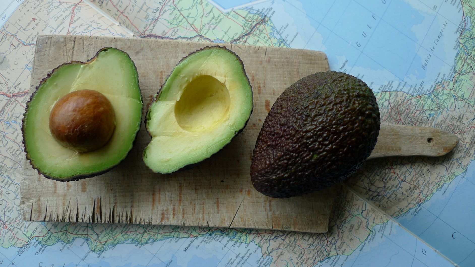 History of the Avocado